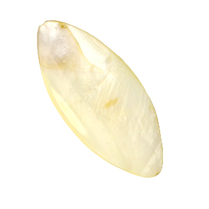 Schelp kraal ovaal vanilla yellow